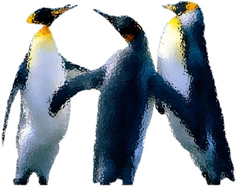 Glassy Penguins