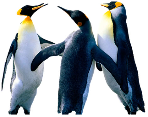 Penguind In Word - No Background